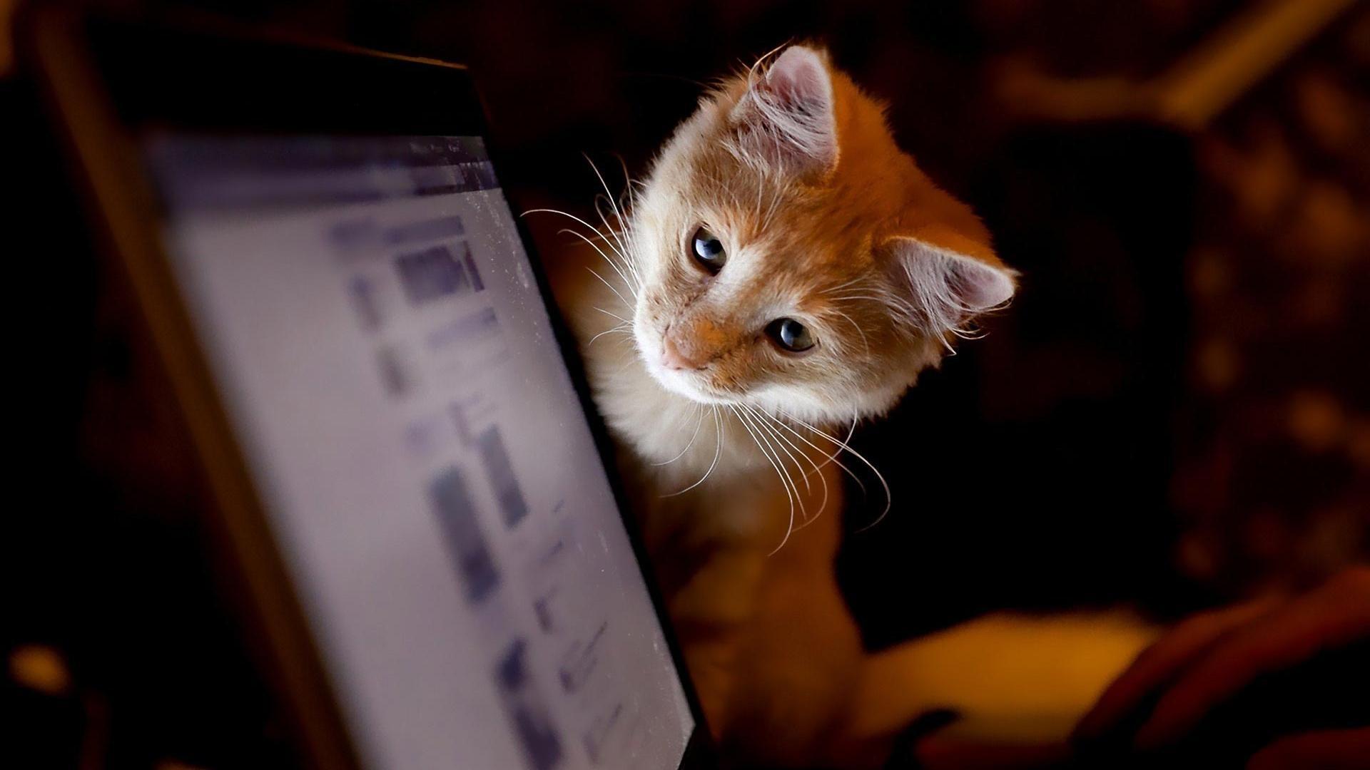 cat-kitty-computer-screen-animal-1920x1080